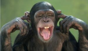 monkey-ears