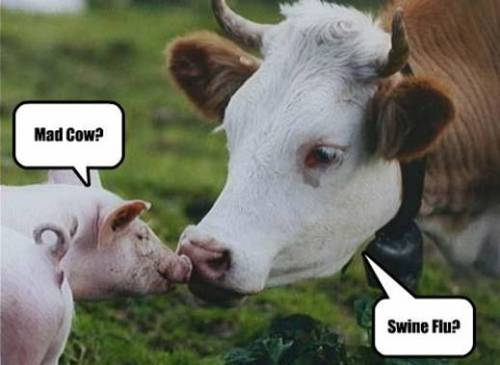 mad cow swine flu